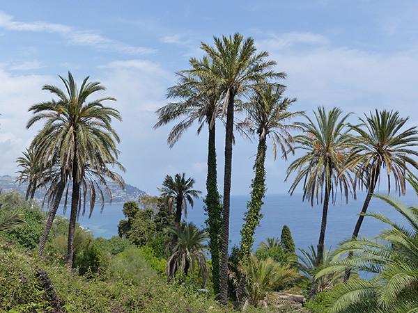 palmiers sur la mer