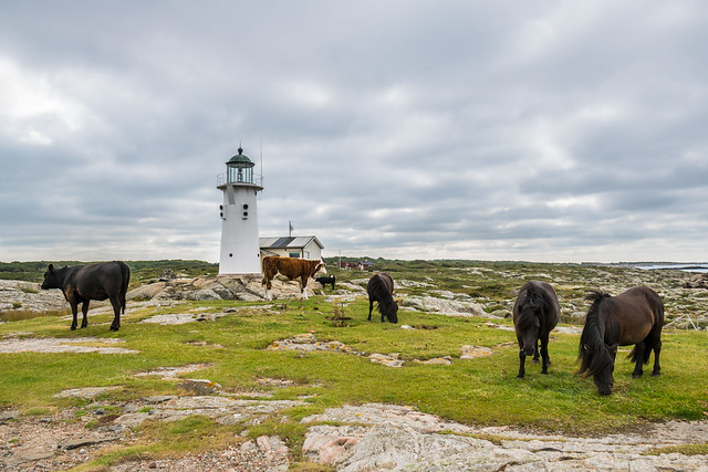 Animals by the Lighthouse