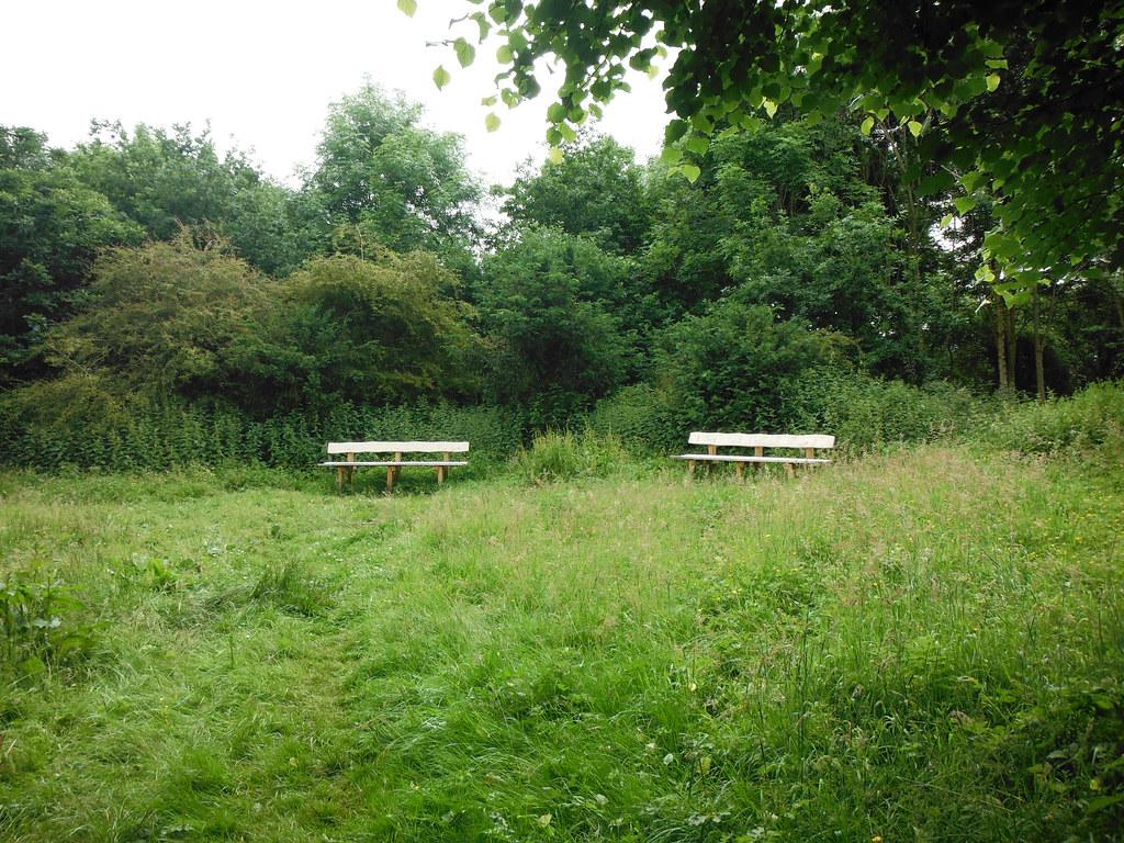 Anne's Wood 2