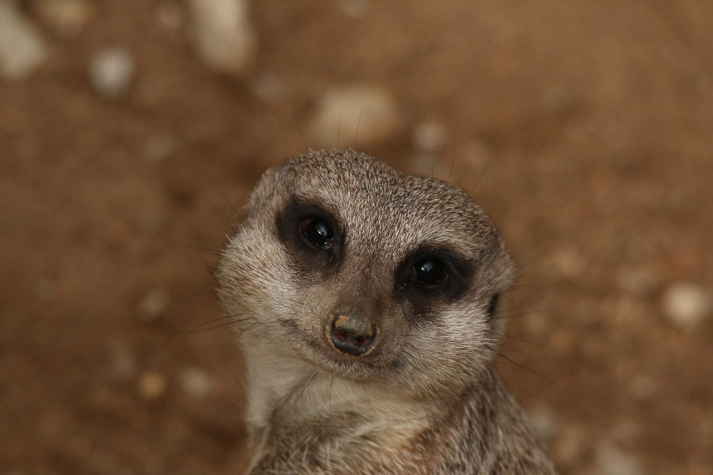 Zoo de la Boissère du Doré 29072568394_6ac40a8717_b