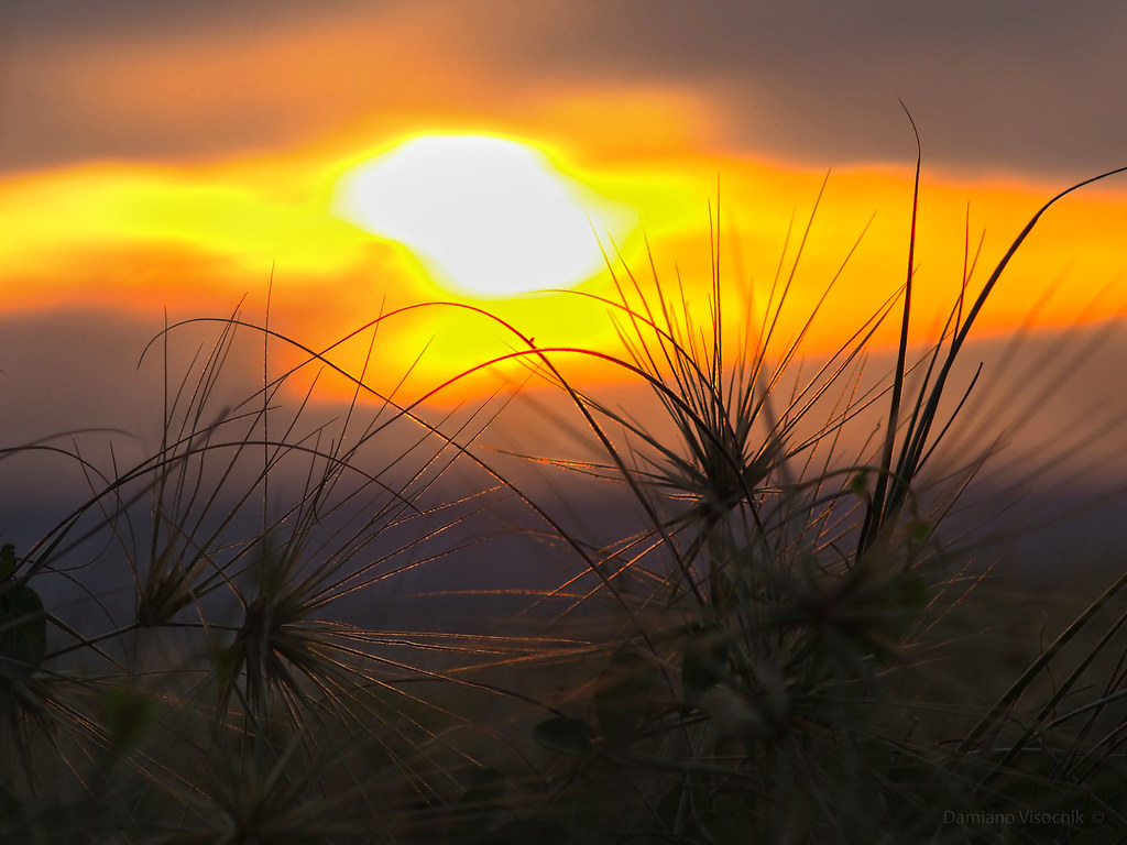 Spinifex sunset_c