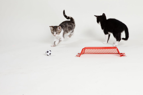 Kittens Playing Soccer | by Found Animals