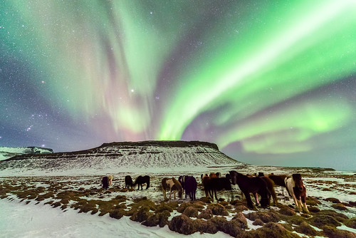 Horses Under the Aurora Borealis | by Greg Annandale