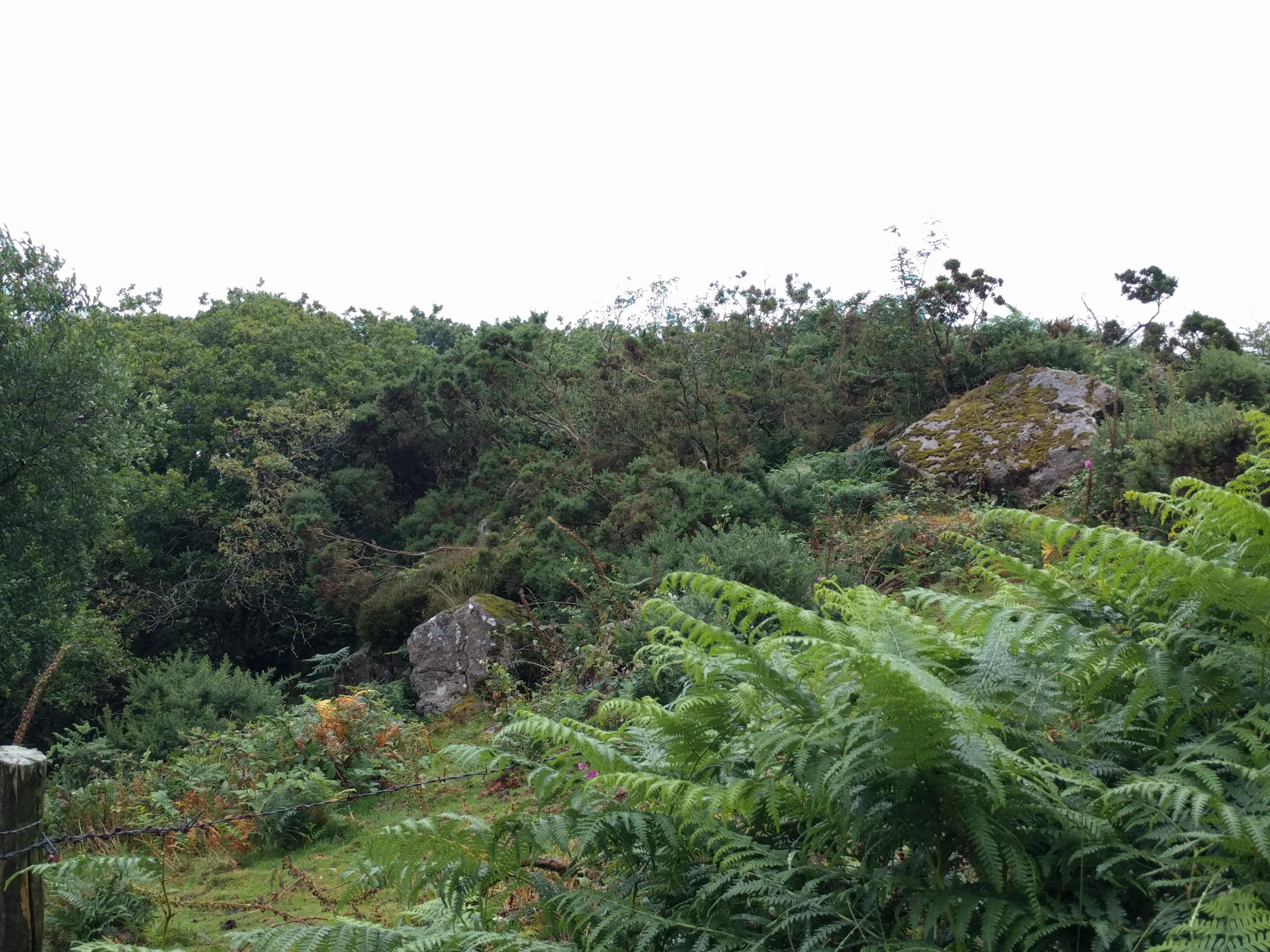 Bits of Callisham Tor #dartmoor #sh