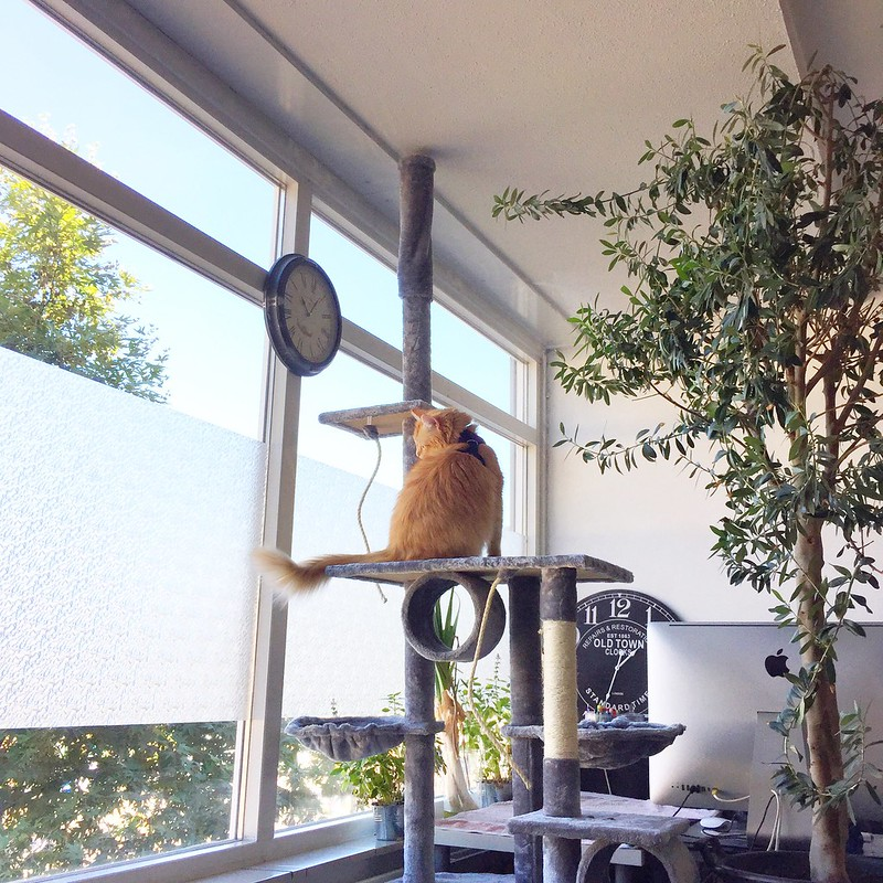 How to keep your indoor cat active, motivated and happy