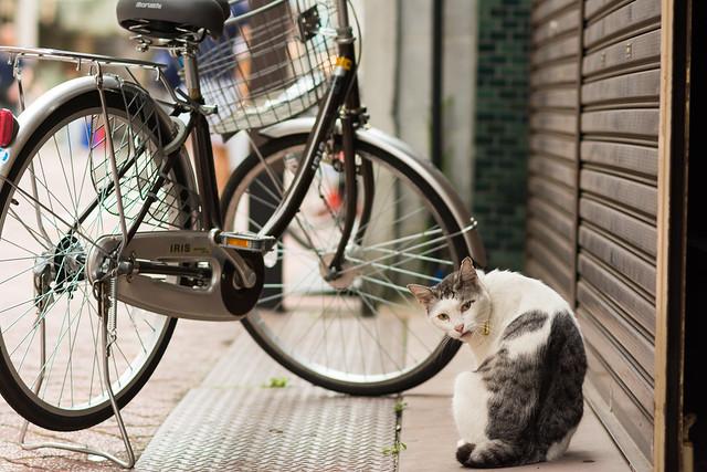 北千住の商店街でくつろぐネコの写真