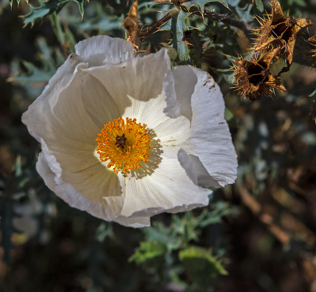 Wild-flower-32_7d1__010916