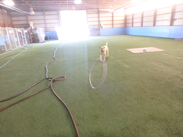 09/25/16 Hula Hoop Play