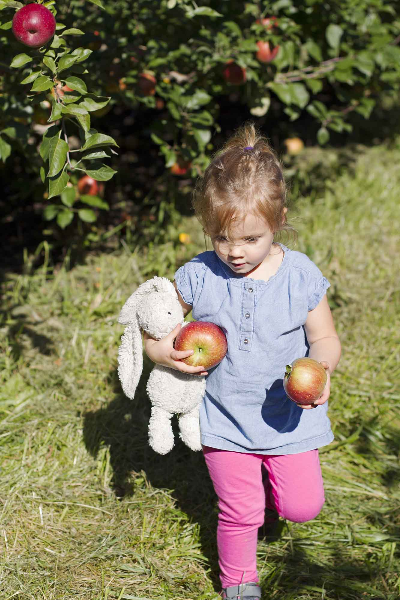 Avery at the Apple Orchard | girlversusdough.com @girlversusdough