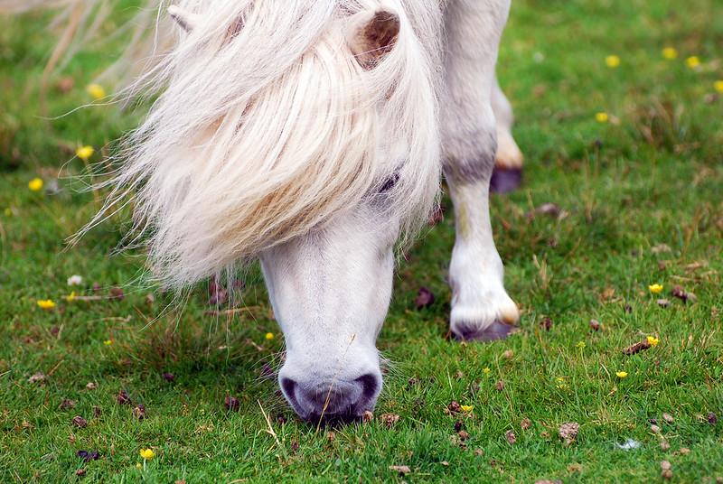 Il Cavallo Bianco di Napoleone