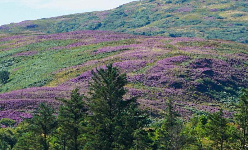 Scotland-48.jpg