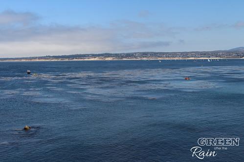 160703f Monterey Bay Aquarium _070