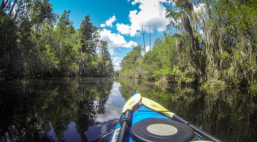 Lowcountry Unfiltered at Okefenokee-86
