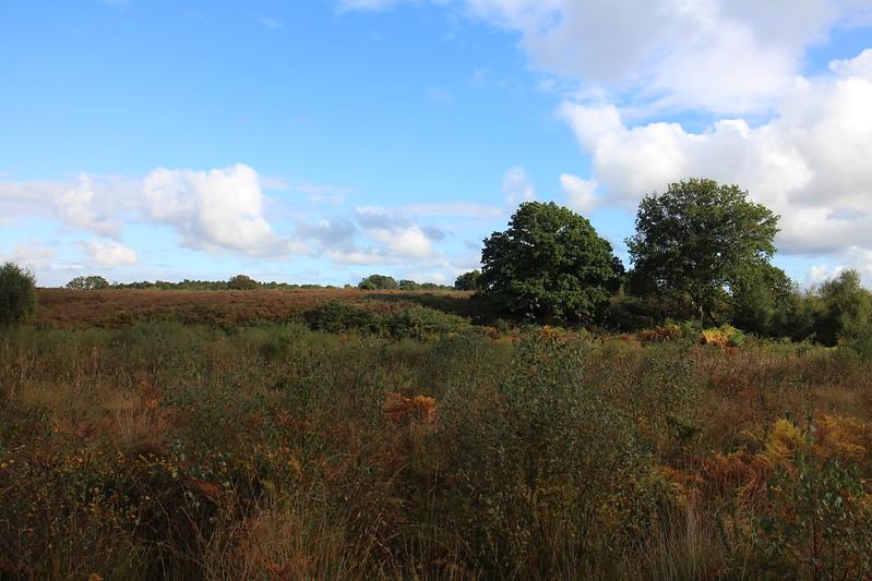 Buxton Heath with Caws