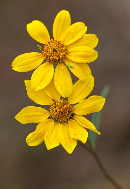 Flower-5-7D1-_092016