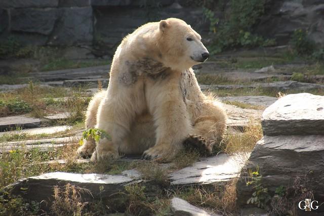 Tierpark Friedrichsfelde 25.09.167