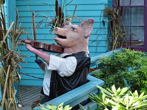 Pig with a fiddle
