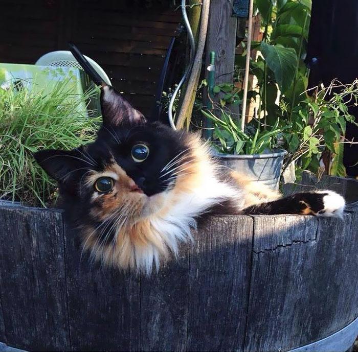 Слепая кошка Жасмин - ПоЗиТиФфЧиК - сайт позитивного настроения!