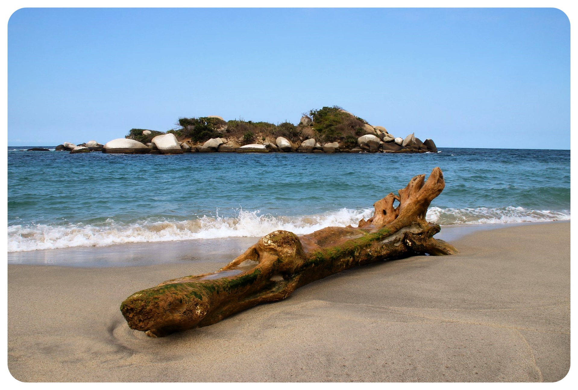 tayrona national park tree trunk