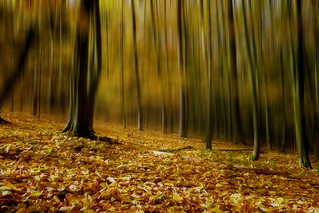 Autumn forest | by o_neill