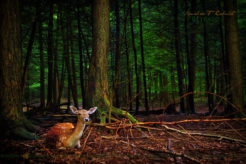 The Deer Hunter | by Ronaldo F Cabuhat