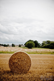 Hay Rolls by Meeta K. Wolff | by Meeta Wolff @ What's For Lunch, Honey?