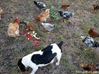 Chicken snacks. . . they aren't just for chickens (8) | by Farmgirl Susan