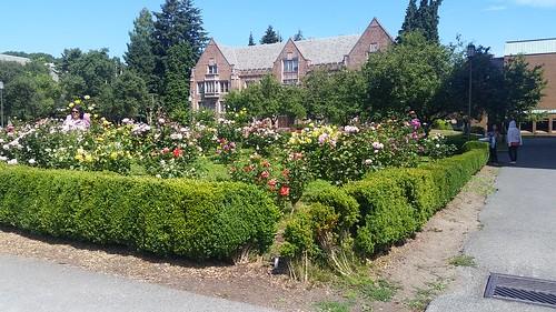 University of Washington Gardens