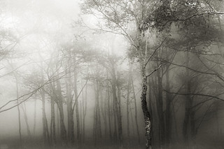 mist | by MakiEni777
