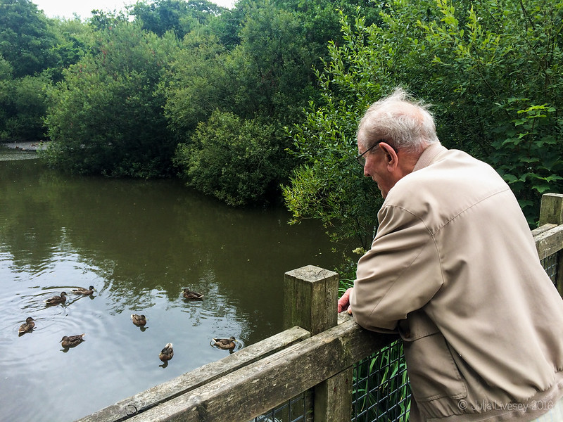 Dad watches the ducks