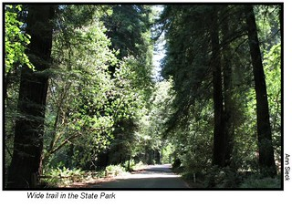 Cross Marin Trail North | by Transit&Trails