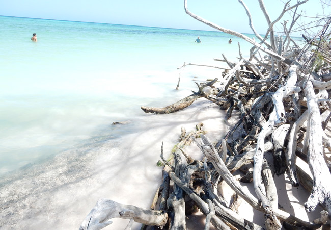 starfish-beach-branches