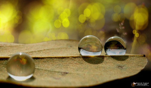 Water Drops 15 | by notisamanalaya