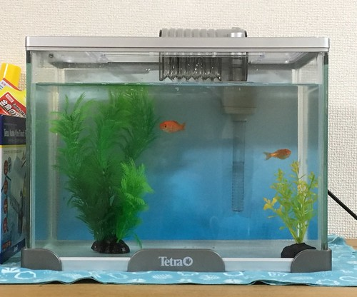 金魚:人工水草を投入