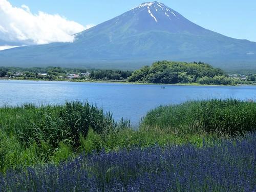jp16-Fuji-Kawaguchiko-Nord-Shizen Seikatsu-kan (4)