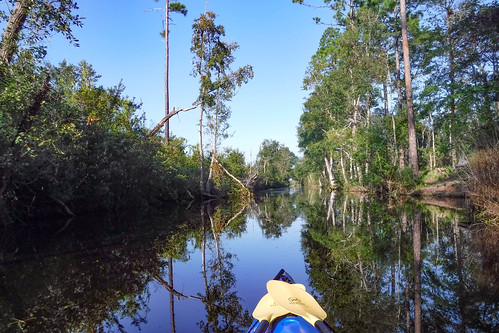 Lowcountry Unfiltered at Okefenokee-033