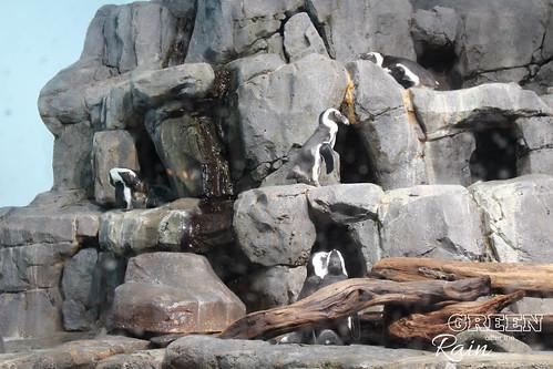 160703d Splash Zone and Penguins _24
