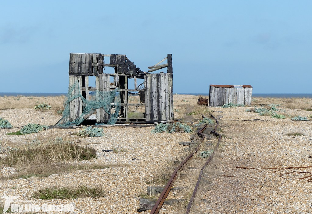 P1040675 - Dungeness