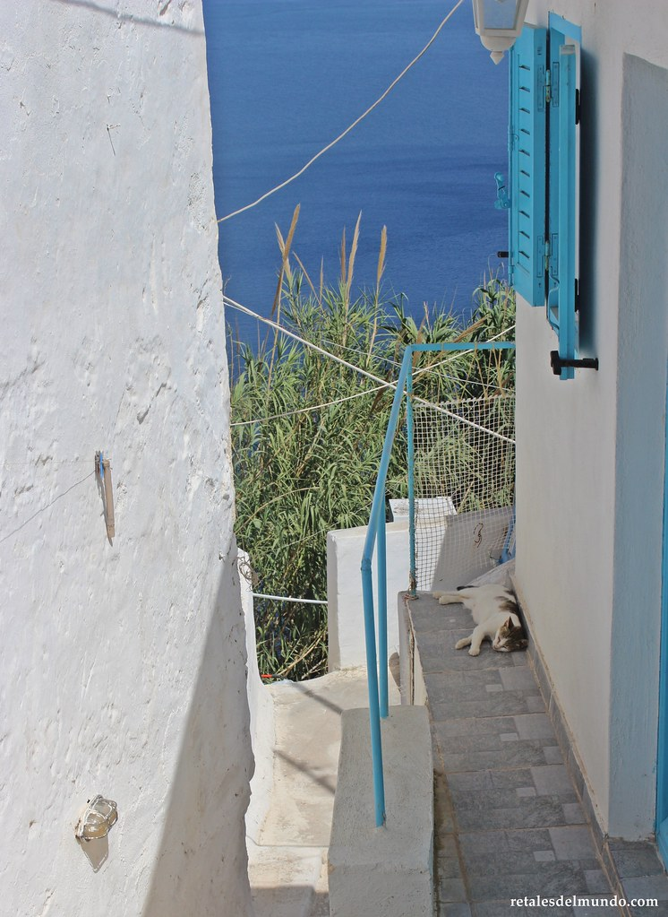 Gatos de Grecia