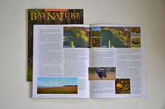 My 1st 2 published photos in BN April-June 2012