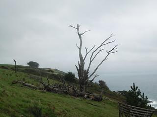 20160909_4 Tree 35