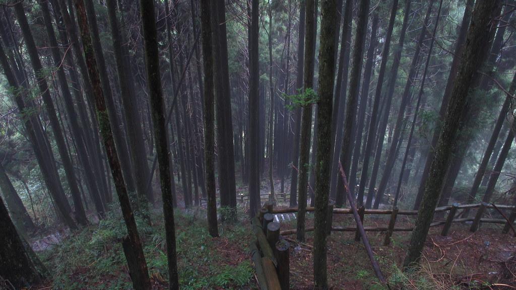 1011209_38_檜山巨木群步道