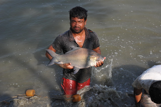 A local fish farmer with his catch. Photo by Finn Thilsted, 2012.