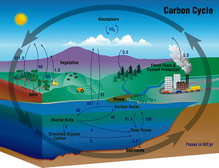 carbon cycle the annual flux of co2 in gigatons gt or. Black Bedroom Furniture Sets. Home Design Ideas