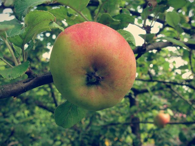Une pomme par jour ...