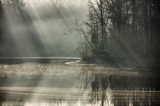 Seagull, Heron & Light | by Denise Worden