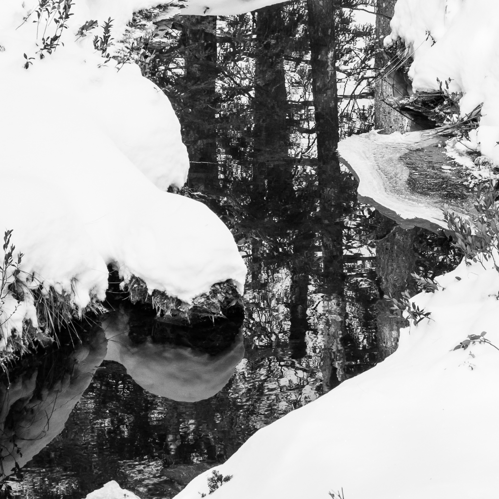 Snow and trees reflected in Guilder Pond