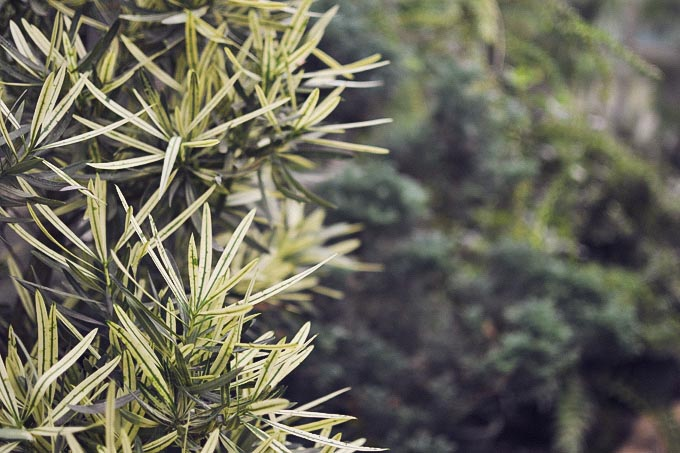 botanic_garden_midi_dress-11