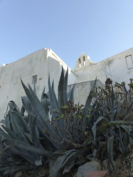 cactus et kastro