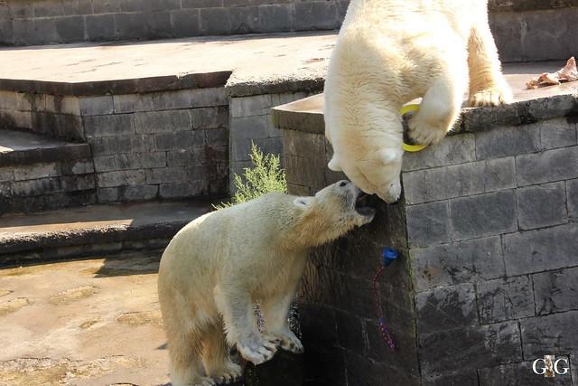 Zoo Rostock 1.Teil 20.08.201676
